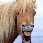 animal laughing2